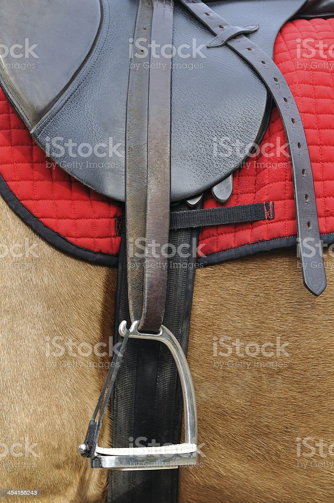 close up of a horse harness stock photo