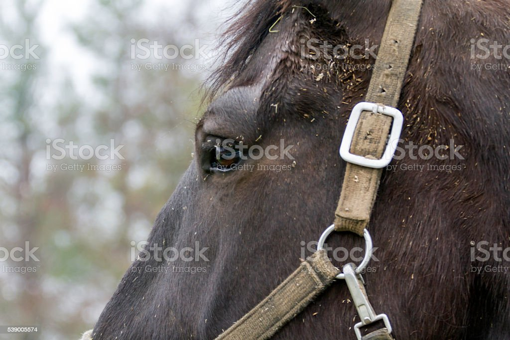 Close -up of a horse head stock photo
