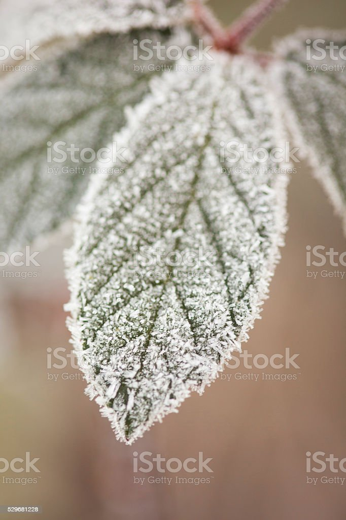 Close up of a leaf with covered in frost. stock photo