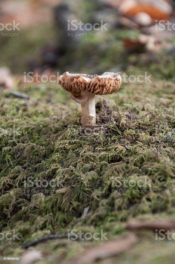 close up of a mushroom stock photo