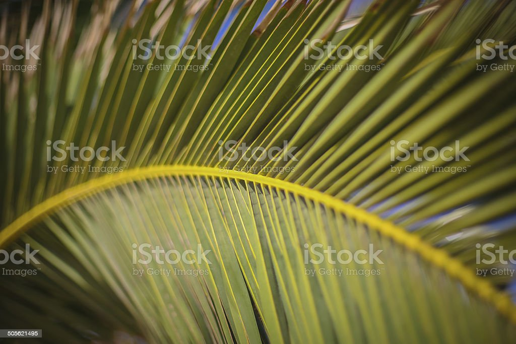 Close up of a palm leaf forming an arc royalty-free stock photo