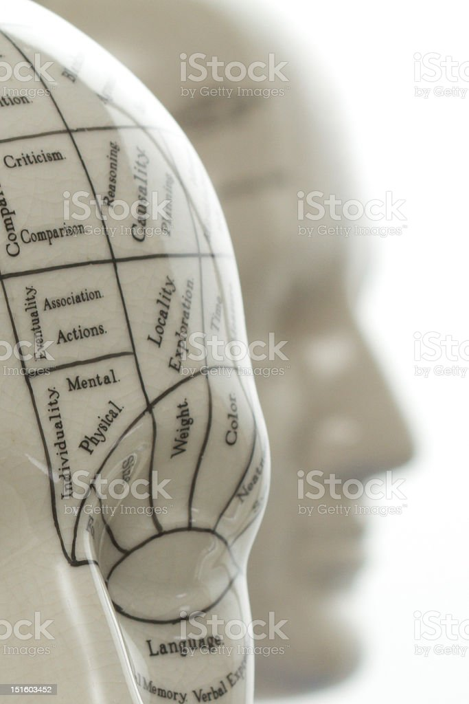 Close up of a part of phrenology head royalty-free stock photo
