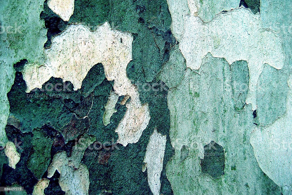 Close up of a platan stock photo