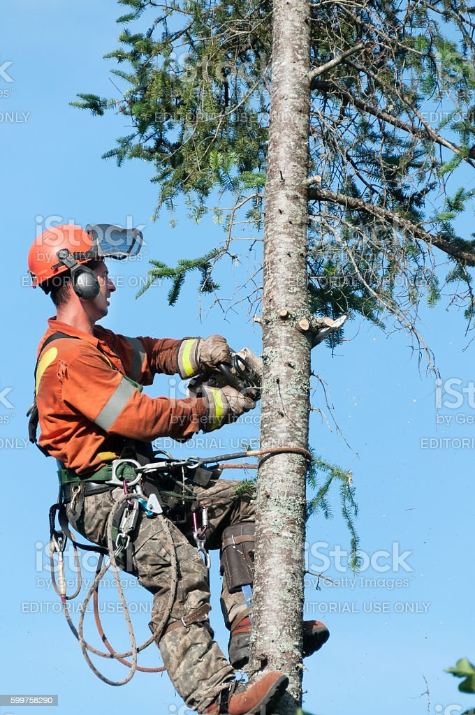 close up of a Professional lumberjack cutting tree stock photo