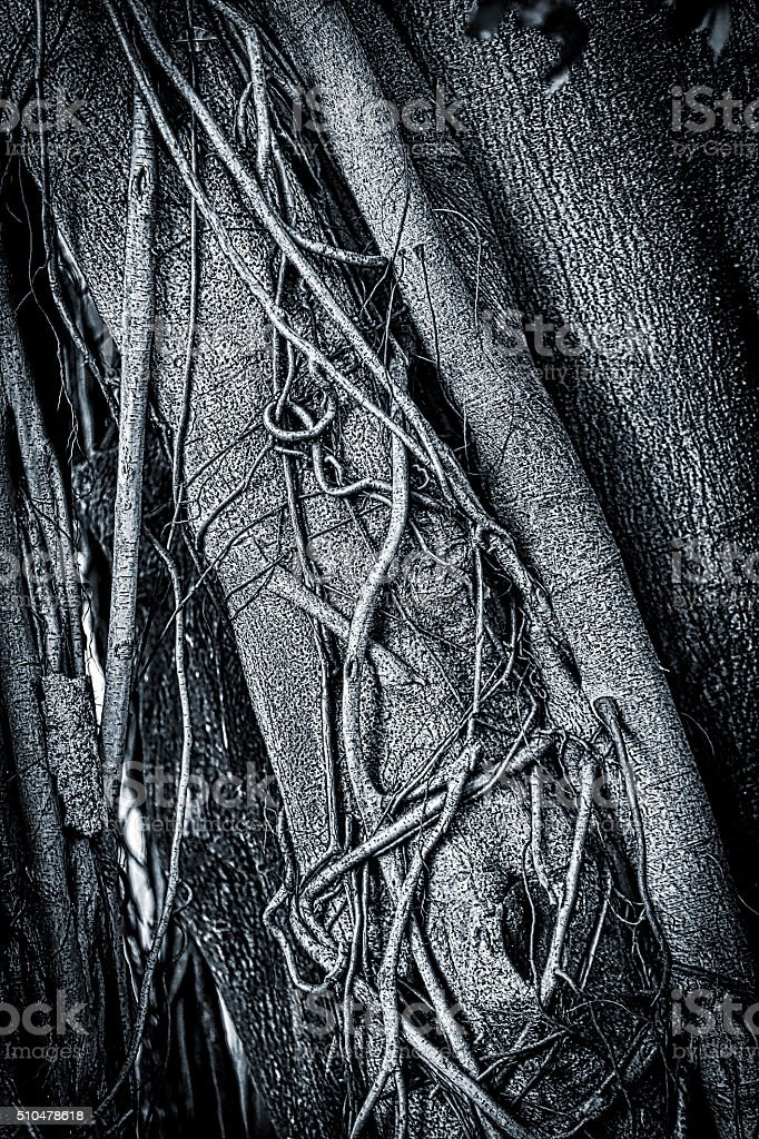 Close Up Of A Rainforest Tree Covered In Liana Vines stock photo