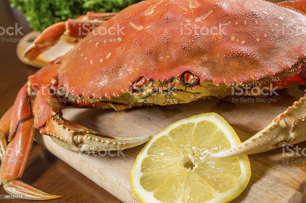 Close up of a Raw Dungeness Crab stock photo