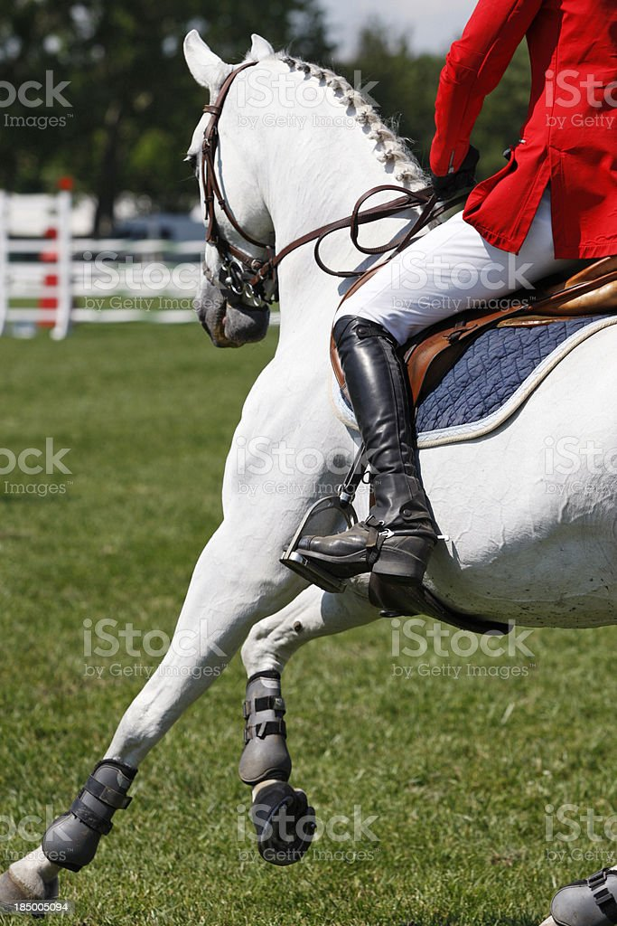 Close up of a show jumping horse stock photo
