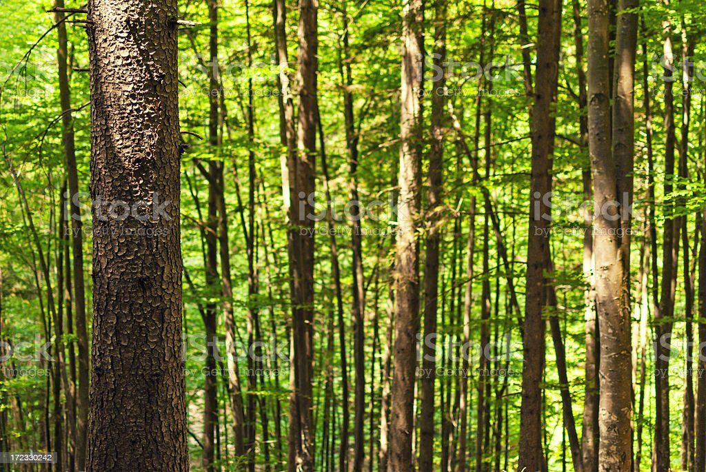Close up of a tree in forest royalty-free stock photo