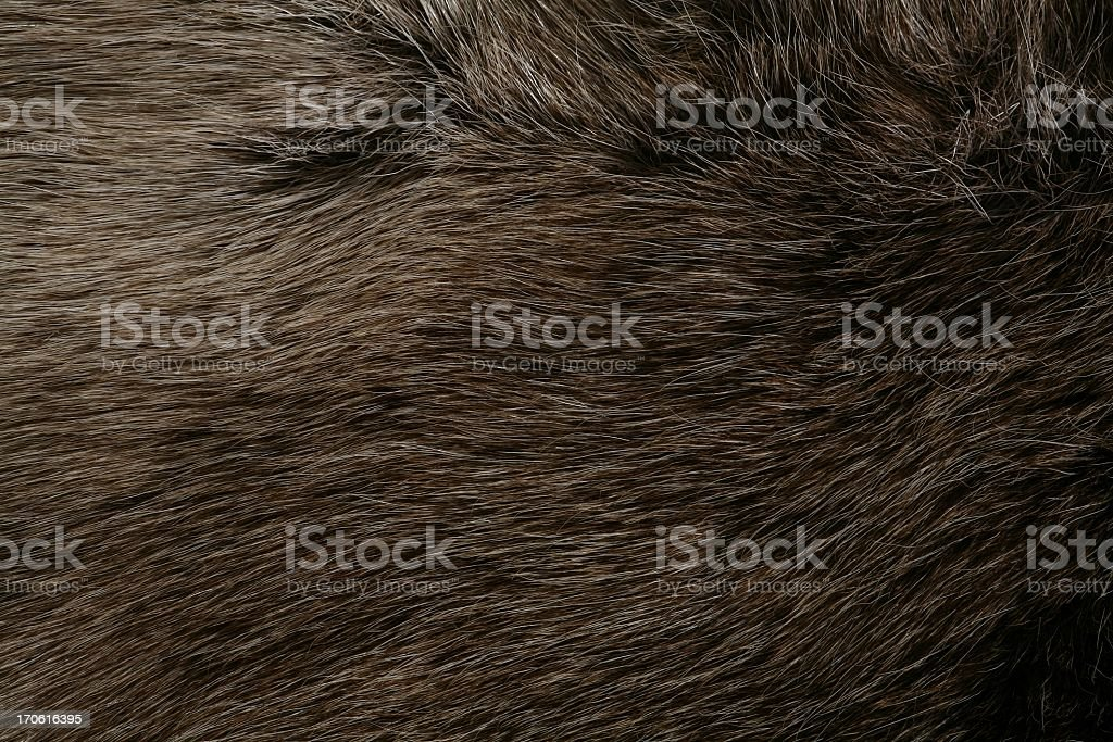 Close up of an animals brown fur stock photo