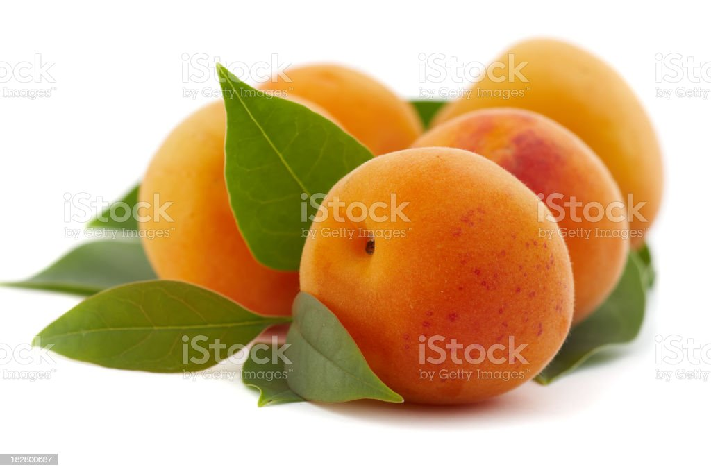 Close up of apricots freshly picked from the tree stock photo