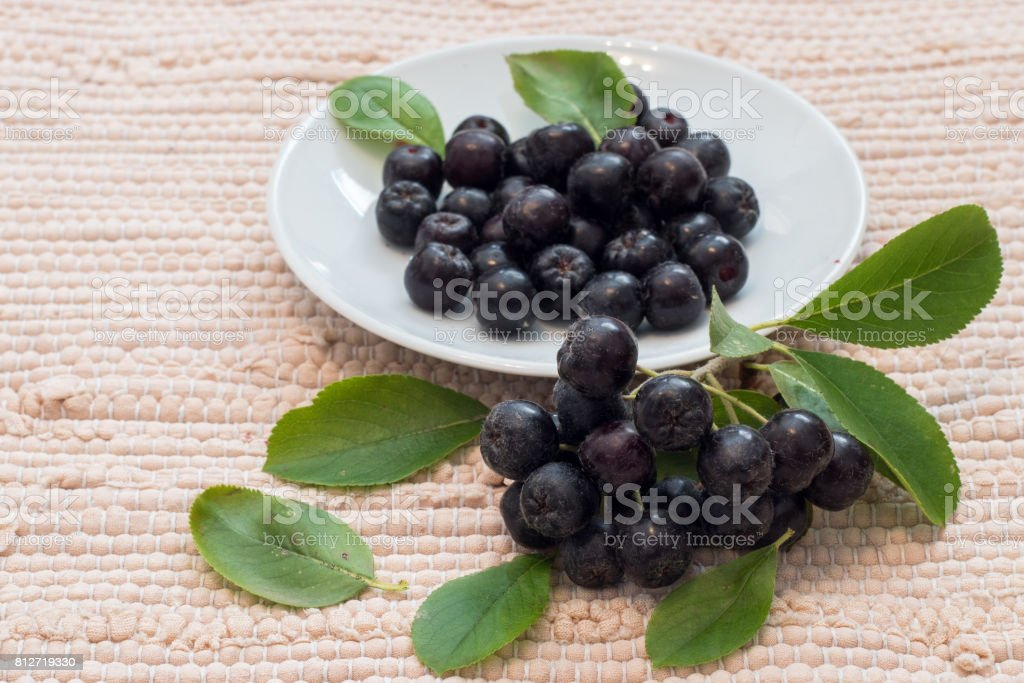Close up of Aronia melanocarpa berries (black chokeberry) with leaves in white dish on textile background stock photo