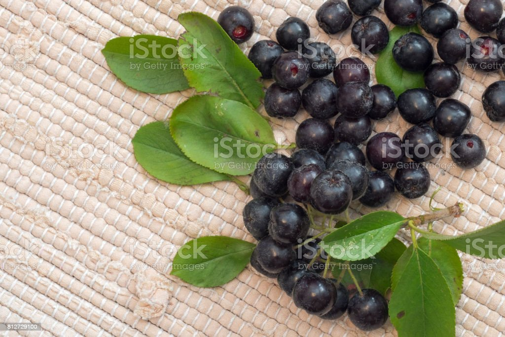 Close up of Aronia melanocarpa berries (black chokeberry) with leaves on textile background stock photo