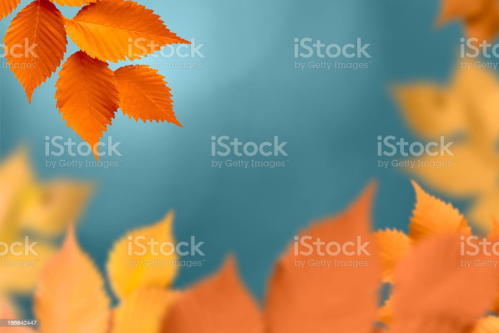 Close up of autumn foliage with orange leaves in focus royalty-free stock photo