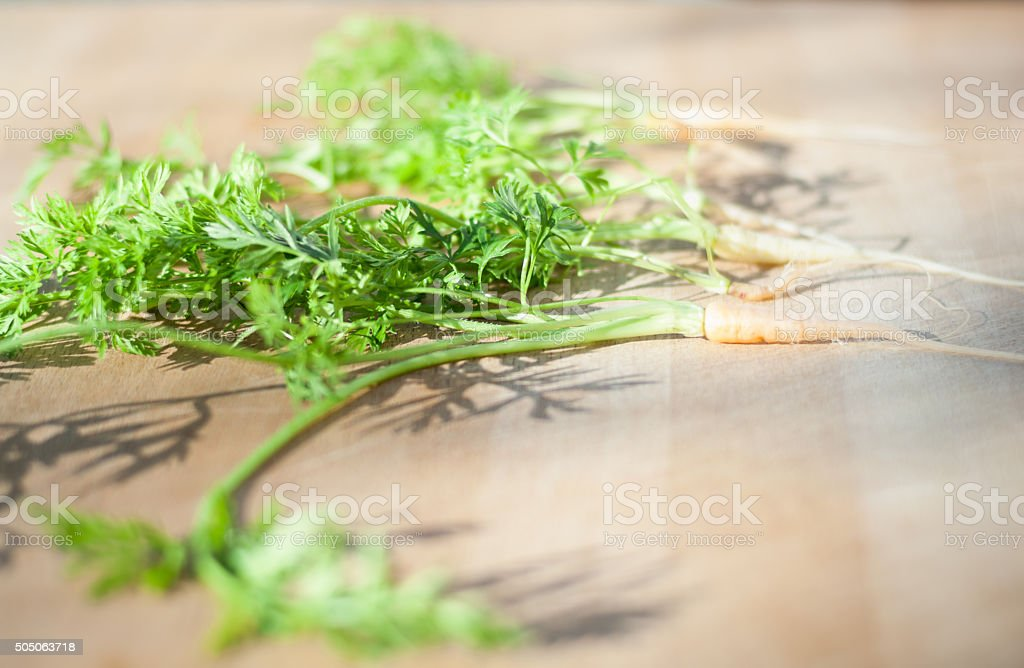 Close up of baby carrot tops on a cutting board stock photo