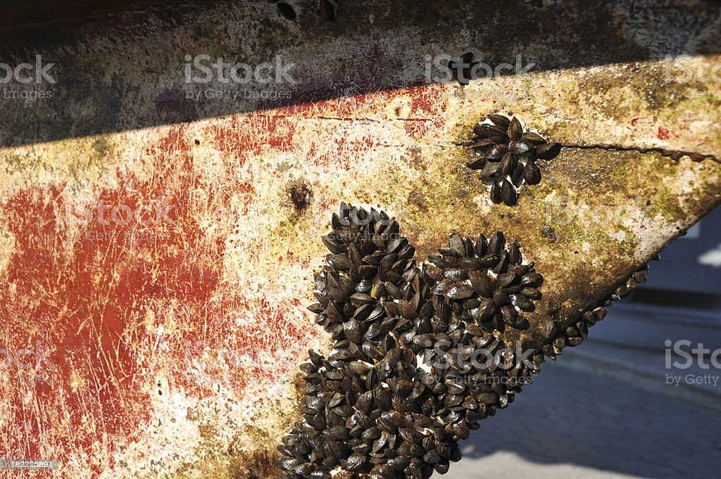 Close up of barnacles and mussels on a boats hull stock photo