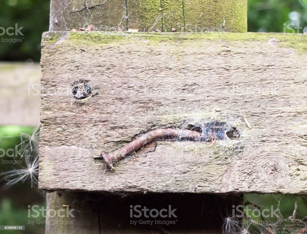 close up of belt and old nail in wooden post stock photo