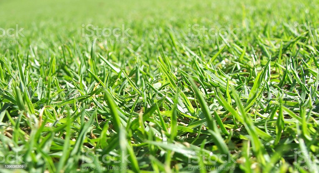 Close up of blades of green grass royalty-free stock photo