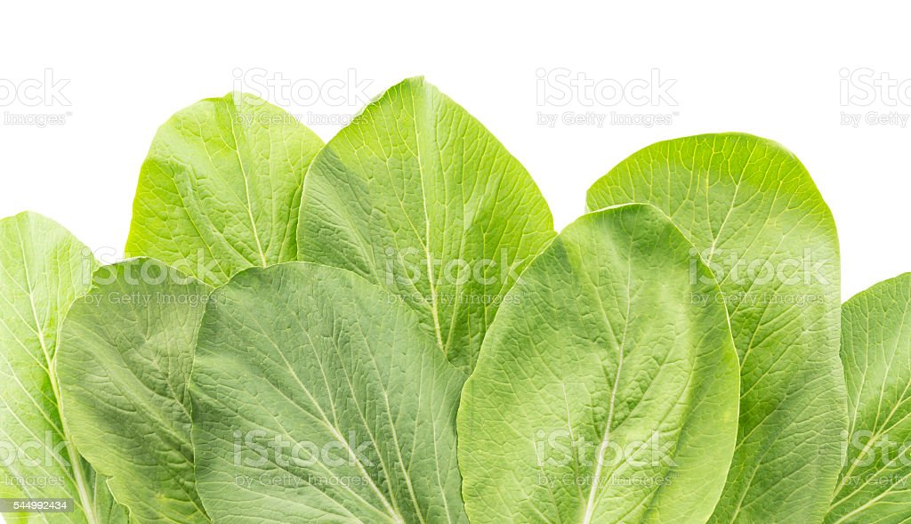 close up of bok choy leaves isolated on white background stock photo