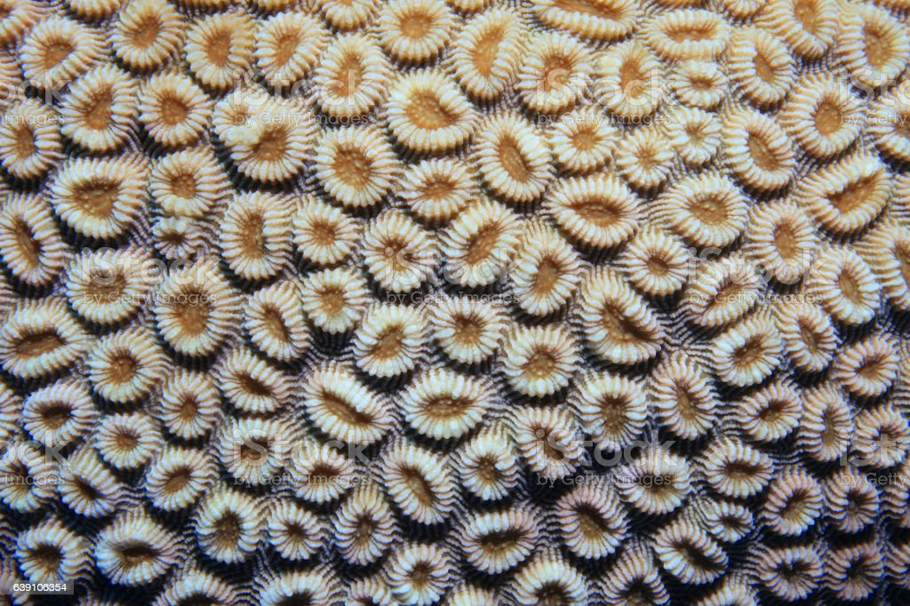 Close up of brain coral stock photo