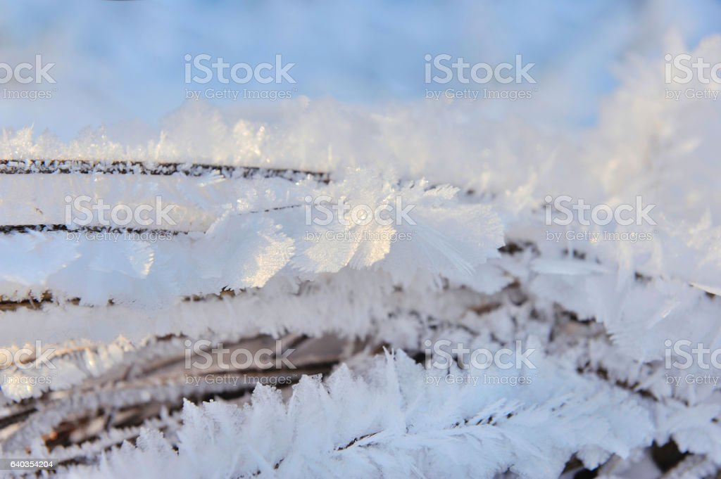 Close up of branch covered with frost stock photo