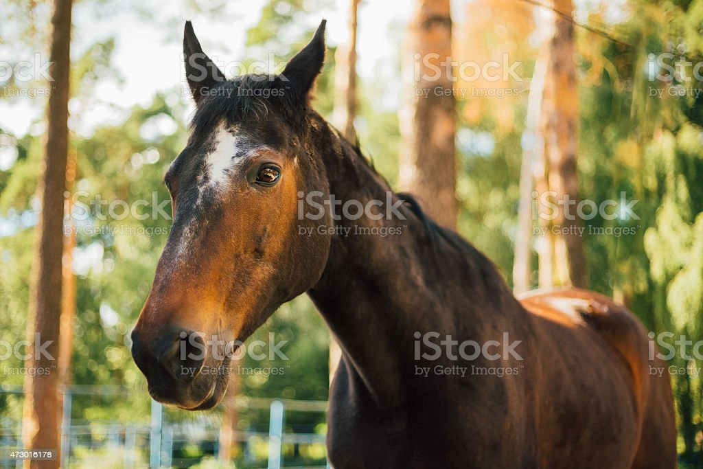 Close Up Of Brown Horse In Farm Paddock stock photo