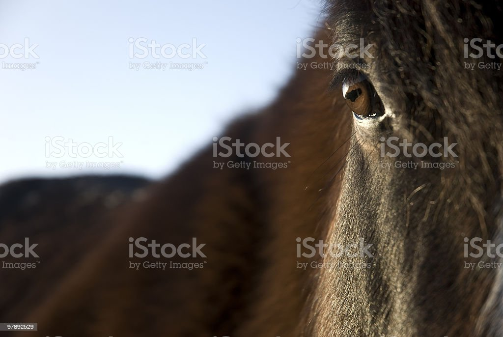close up of brown horse stock photo