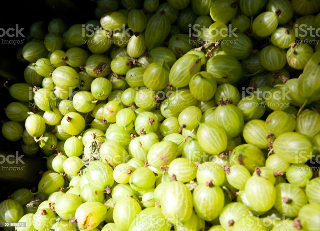 Close up of bunch of gooseberries stock photo