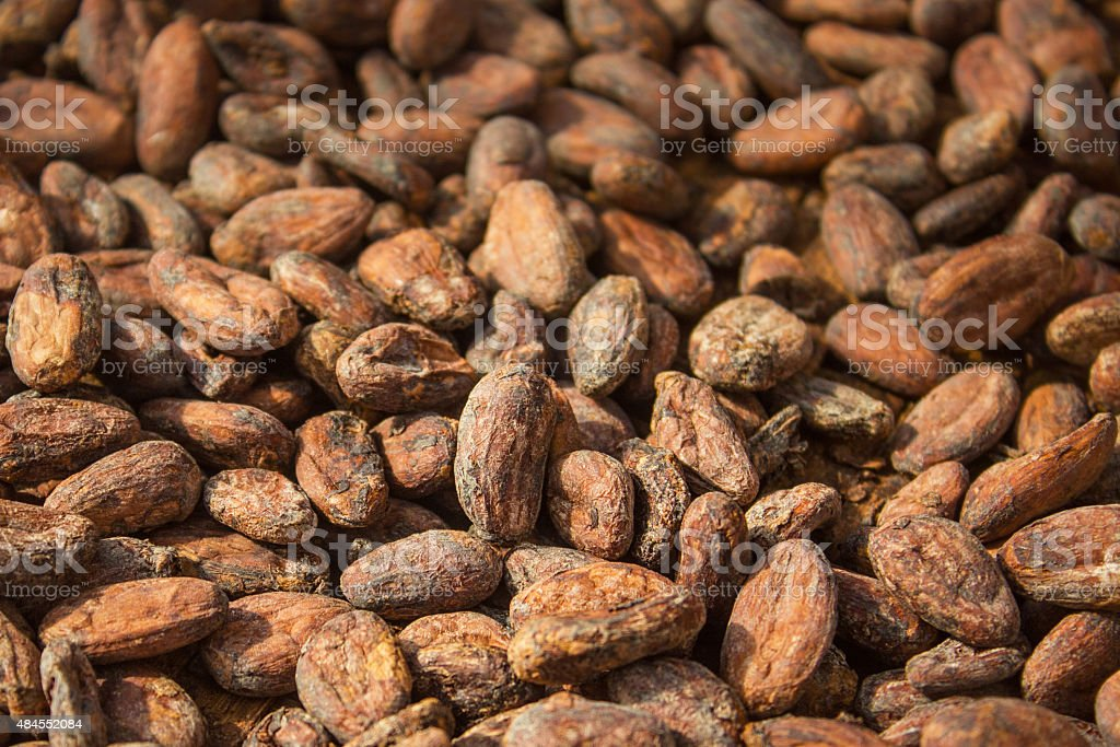 Close up of cacao beans raw organic stock photo