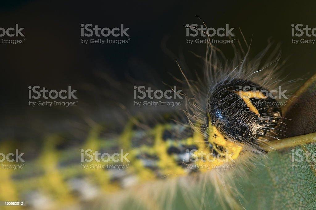 close up of caterpillar near stock photo