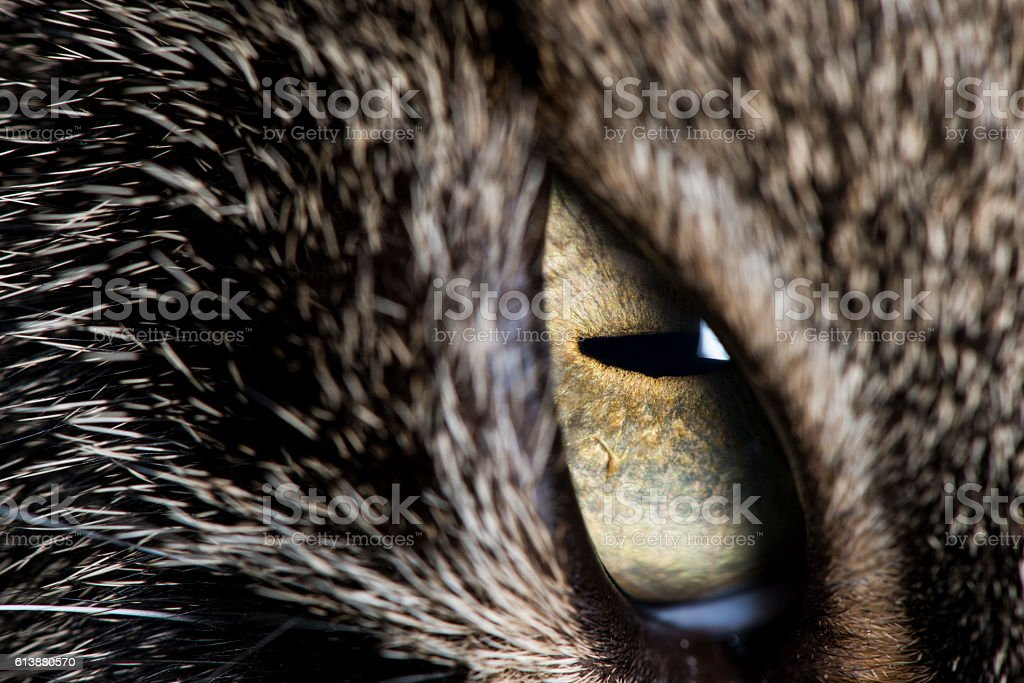 Close up of cats vibrant eye stock photo