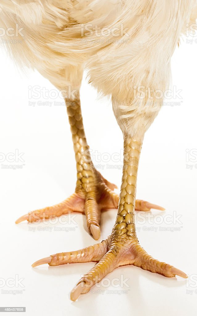 Close Up of Chicken Legs on White Background stock photo