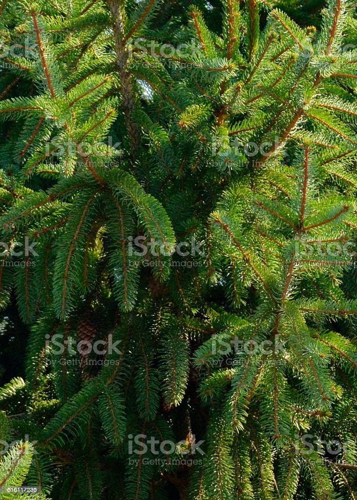 Close up of Christmas Tree for Background stock photo