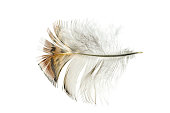 Close up of   color feather
