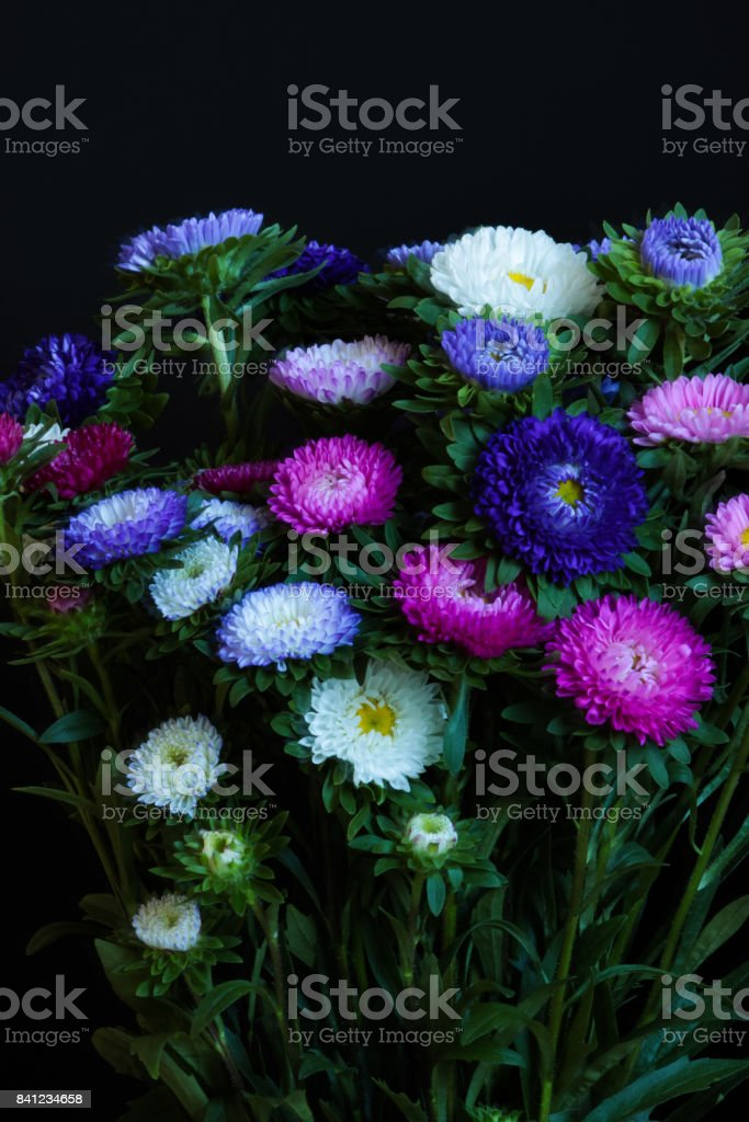 Close up of Colorful Chrysanths (Chrysanthemum). stock photo