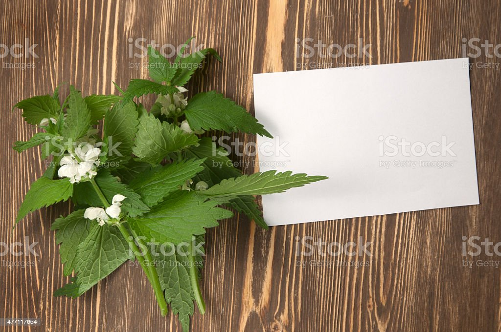 Close up of day-nettle and blank paper or letter stock photo