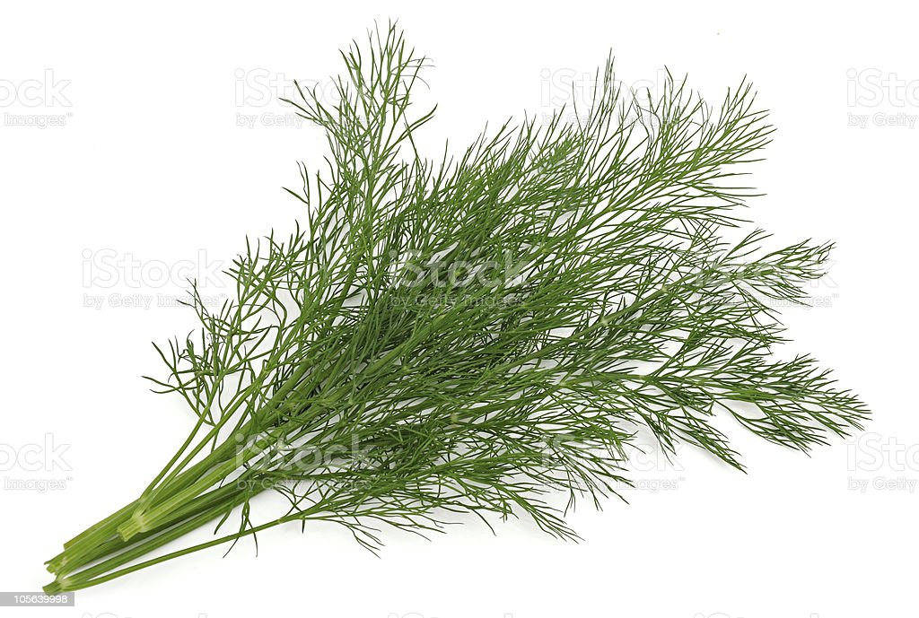 Close up of dill herb on white studio background royalty-free stock photo