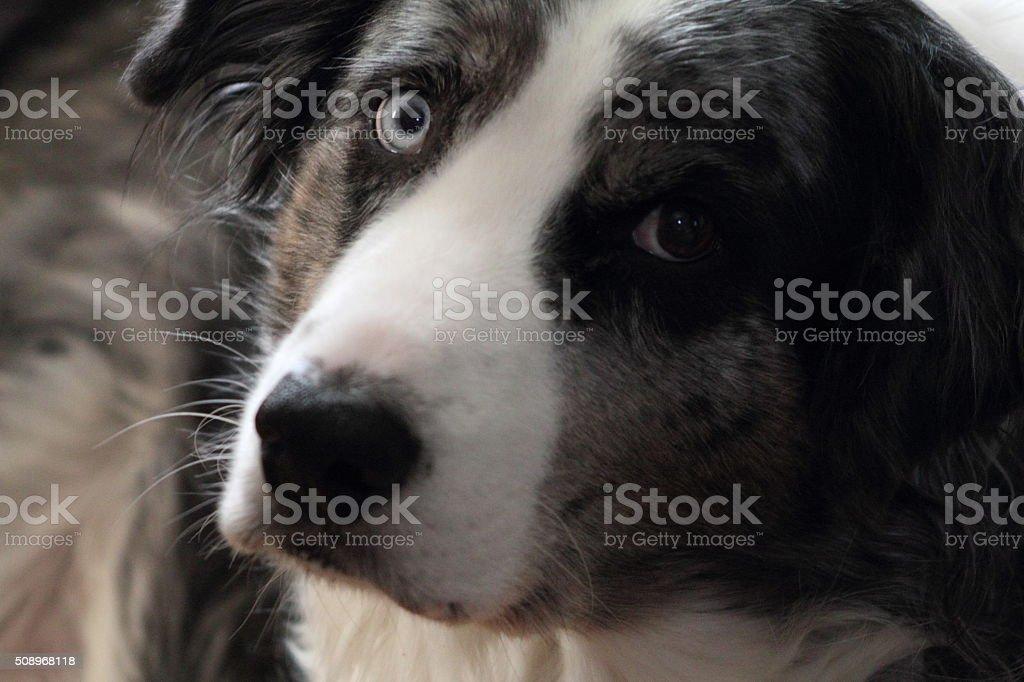 Close up of dog's face stock photo