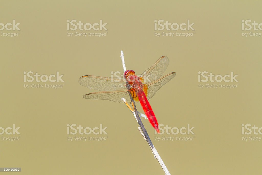 Close up of dragonfly stock photo