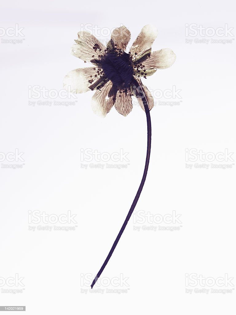 Close up of dried flower specimen stock photo