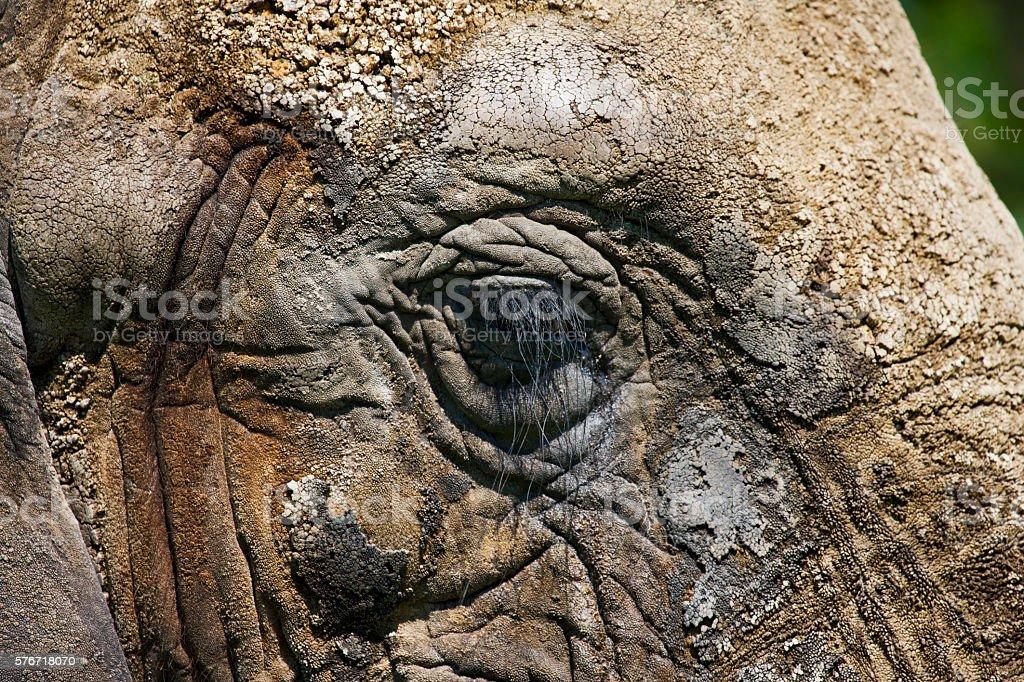 close up of elephant side face stock photo
