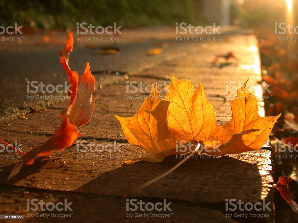 Close up of fall leaves on sidewalk at sunset stock photo