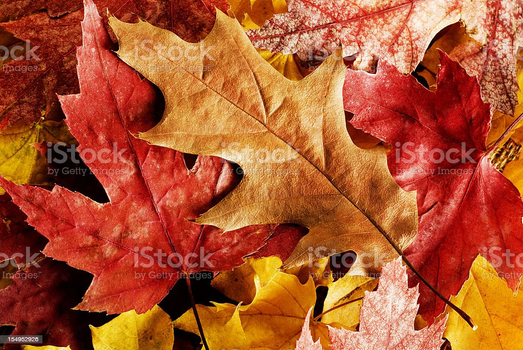 Close up of fallen autumn leaves stock photo
