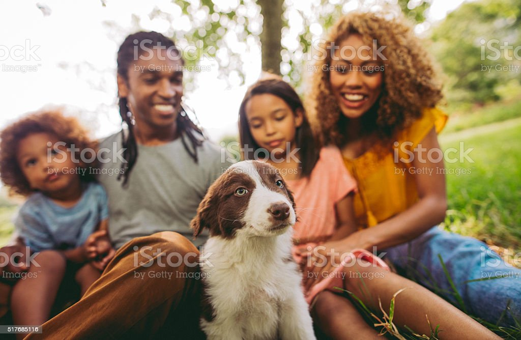 Close up of family enjoying new adorable fluffy border collie stock photo