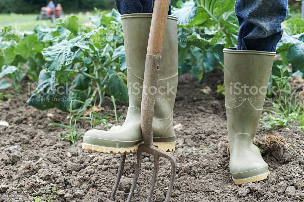 Close Up Of Farmer Working In Organic Farm Field stock photo