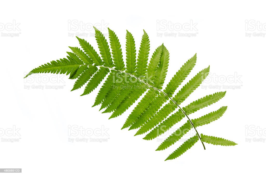 Close up of fern stock photo