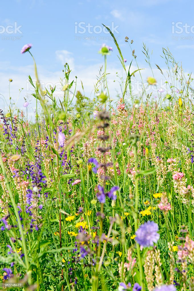 Close up of flowers and grass in field royalty-free stock photo