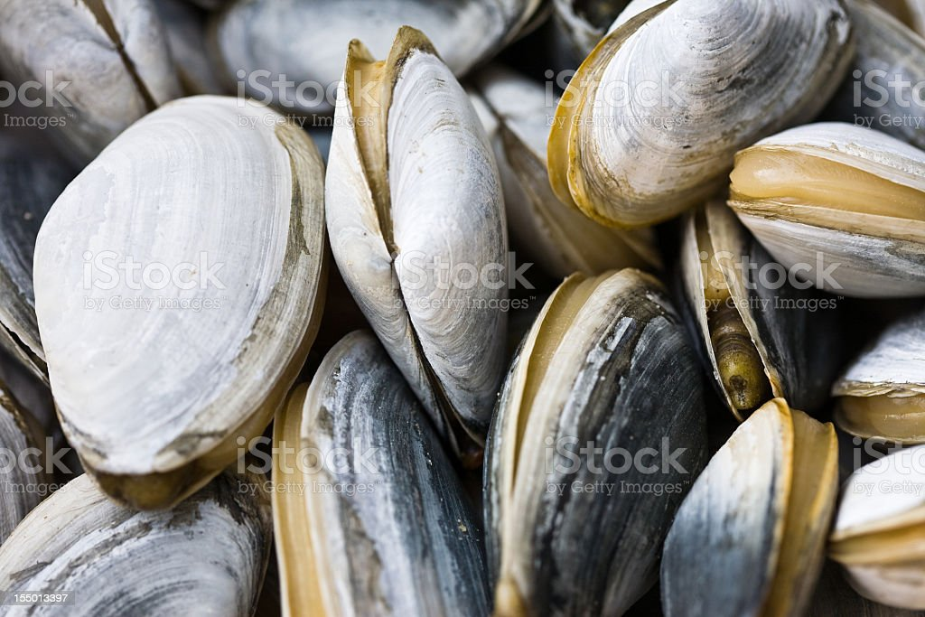 Close up of Fresh Clams stock photo