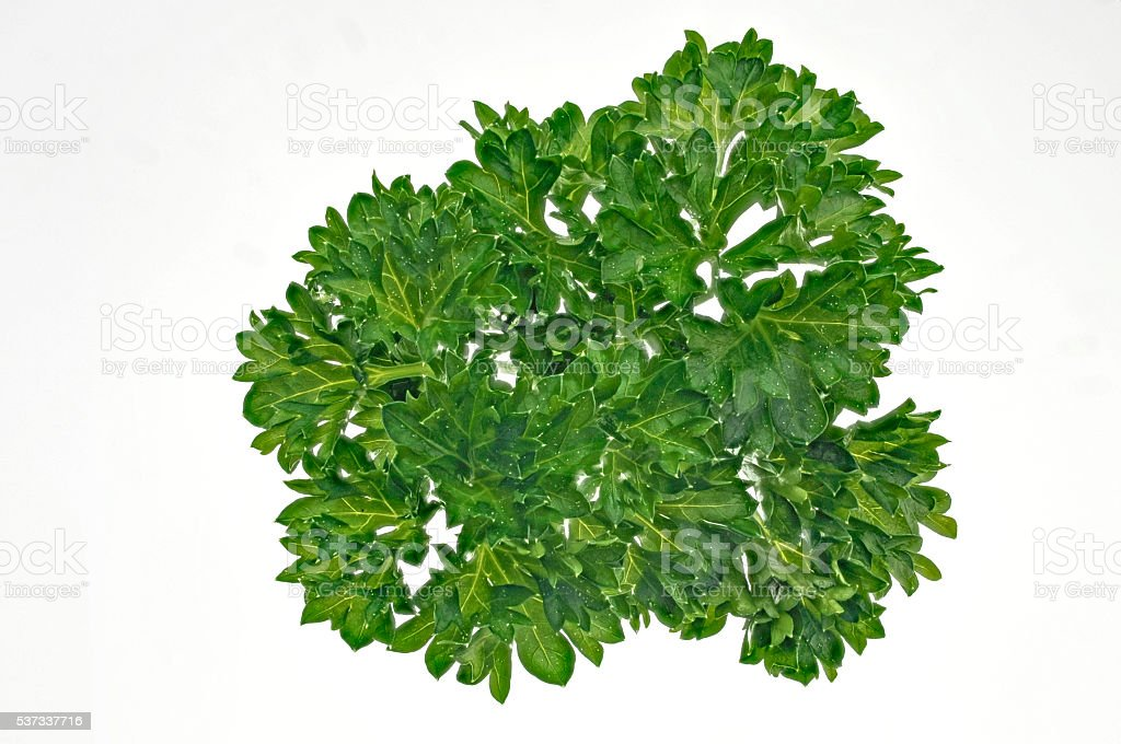 Close up of fresh parsley on white stock photo