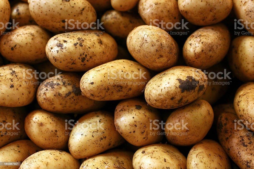 Close up of fresh potatoes stock photo