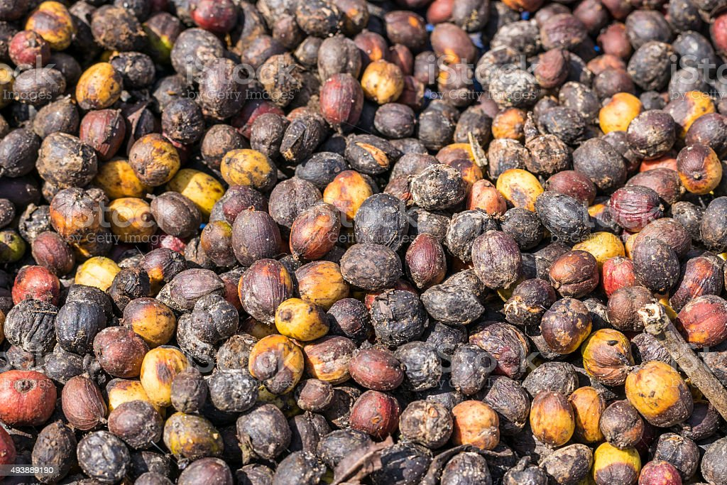 Close up of fresh raw coffee beans background stock photo